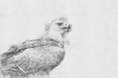 Eagle. Sketch with pencil Royalty Free Stock Images