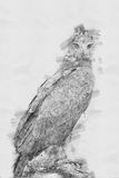 Eagle. Sketch with pencil Royalty Free Stock Image