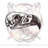 Eagle Skull Hand Drawn Images stock