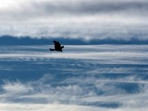 The eagle in the sky. The eagle soaring in the sky among clouds Stock Photo