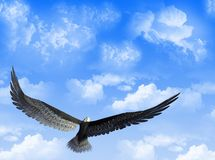 Eagle in the sky. An eagle flight against a sky with white clouds royalty free illustration