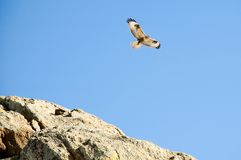 Eagle in the sky. In mountains Royalty Free Stock Images