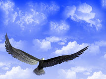 Eagle in the sky Stock Photo