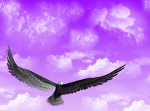 Eagle in the sky Royalty Free Stock Image