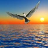 Eagle In Sky. An eagle flying over an ocean Stock Photo