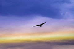 Eagle in the sky Royalty Free Stock Photography