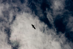 Eagle in the sky Stock Photography