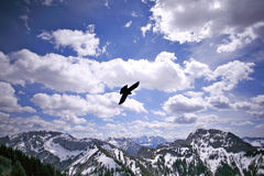 Eagle in the sky, Germany Royalty Free Stock Photo