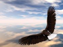 Eagle Soaring. Bald Eagle Soaring in the Sky Stock Photo