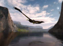 Eagle soaring over water. Eagle soaring over the water and through the mountains Royalty Free Stock Photo