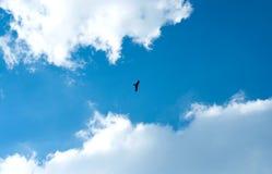 Eagle sobe nas nuvens, contra o c?u azul fotografia de stock royalty free