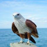 Eagle sobre la tierra con el fondo del cielo azul Imagen de archivo