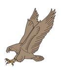Eagle som ska anfallas Arkivbild