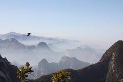 Eagle sopra il Mt Hua Peaks Fotografia Stock