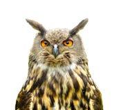 Eagle sowy dymienicy dymienica odizolowywająca na bielu Zdjęcia Stock