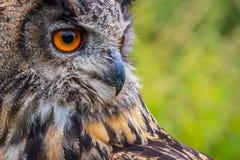 Eagle sowy dymienicy dymienica fotografia royalty free