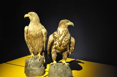 Eagle specimen Stock Images