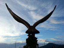 Eagle square Stock Photo