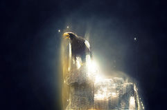 Eagle standing on a rock, abstract animal concept Royalty Free Stock Image
