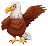 Eagle standing on white background Stock Photo