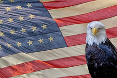 Eagle on star and stripes flag Royalty Free Stock Photography