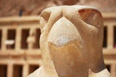 Eagle staty som omger den huvudsakliga ingången av templet av drottningen Hatshepsut i Luxor Arkivfoton