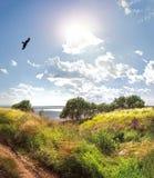Eagle steigt über dem Fluss, Wiese mit Gräsern im Vordergrund und der Mittagssonne an Lizenzfreie Stockbilder