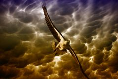 Eagle in the Stormy Sky, Australia Royalty Free Stock Images
