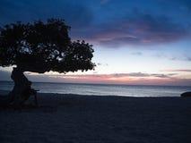 Eagle-strandzonsondergang in Aruba stock afbeelding