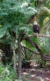Eagle sul ramo Immagine Stock