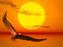 Eagle in the sun. An eagle flight against a very colourful sunset royalty free stock image