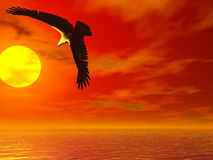 Eagle of the sun Royalty Free Stock Photography