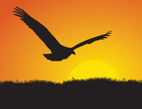 Eagle at Sunset. Profile and silhouette of an eagle flying in front of the setting sun Stock Image