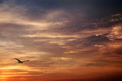 Eagle and sunset. Royalty Free Stock Photography
