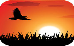Eagle with sunset background. Eagle silhouette with sunset background Royalty Free Stock Images