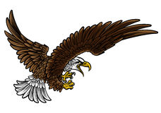 Eagle Swooping Stock Photo