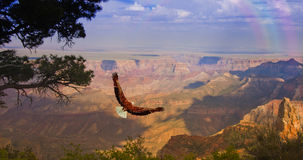 Eagle takes flight over Grand Canyon Royalty Free Stock Photo