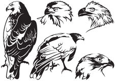 Eagle Tattoo Stock Afbeelding