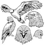 Eagle Tattoo Set Stock Photography