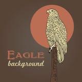 Eagle teckning Fotografering för Bildbyråer
