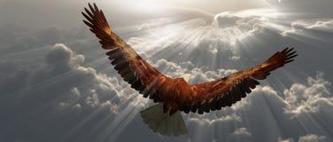 Eagle tijdens de vlucht boven wolken Stock Afbeelding
