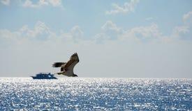 Eagle tijdens de vlucht in de hemel Royalty-vrije Stock Foto