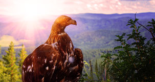 Eagle on top of a tree Royalty Free Stock Photos