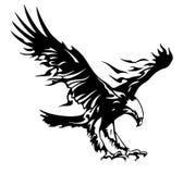 Eagle tuning Royalty Free Stock Photos