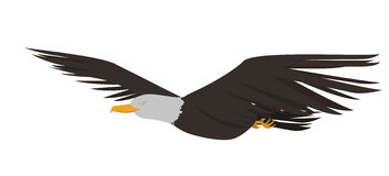 Eagle vector Stock Photos