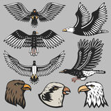 Eagle vector illustration. Stock Photo