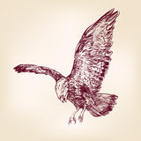 Eagle - vector illustration hand drawn. Eagle - hand drawn vector llustration realistic sketch Stock Photography