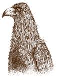 Eagle(vector) Stock Photo