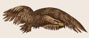 Eagle (vector) Stock Photos