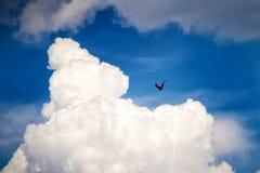 Eagle-vliegen in de hemel stock fotografie